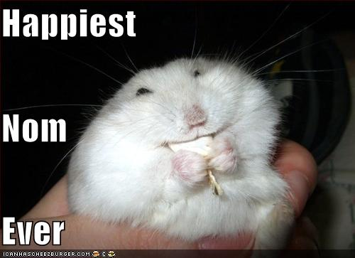 funny-pictures-hamster-has-the-happiest-nom-ever