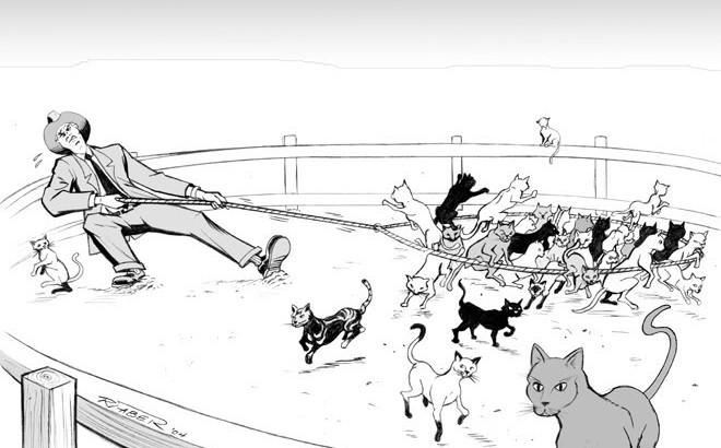 Herding_Cats-e1431799356127-660x410