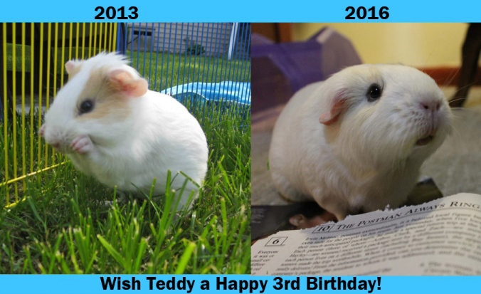 Teddy2016bday.jpg