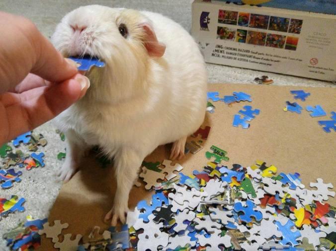 TeddyPiggpuzzle