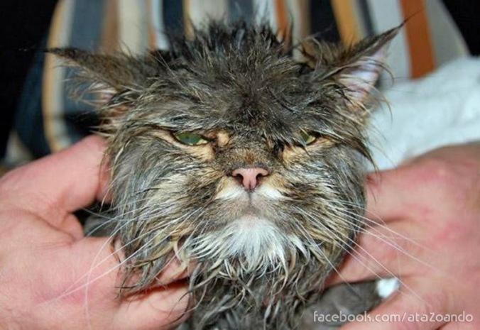 cat-in-bath-08