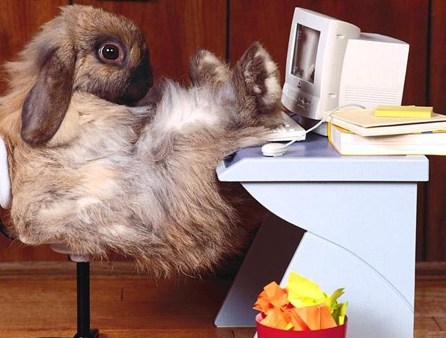 office-rabbit.jpg