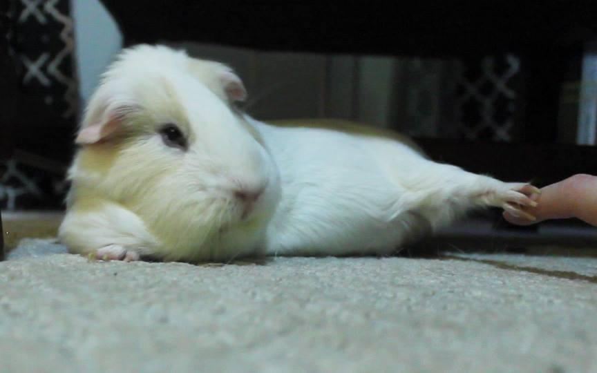 Teddyfoot